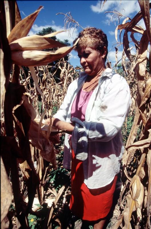 Romelia García trabaja sus cultivos en Nicaragua. Imagen: Pablo Tosco / Oxfam Intermón.