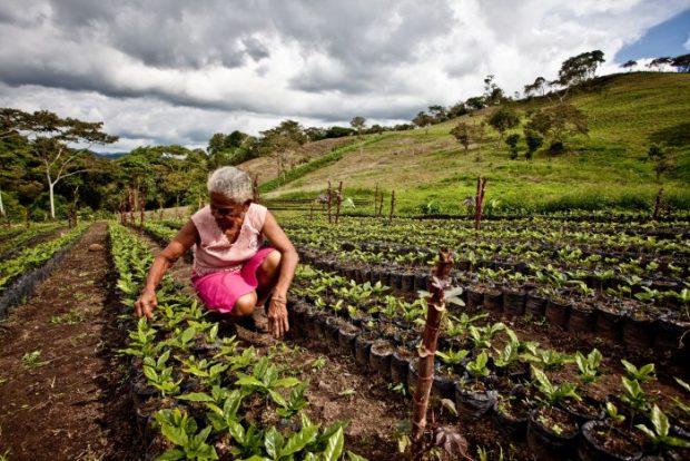 Luz Evelia fue una de las primeras cultivadoras de Tierra Madre en Nicaragua. Imagen: Pablo Tosco / Oxfam Intermón.