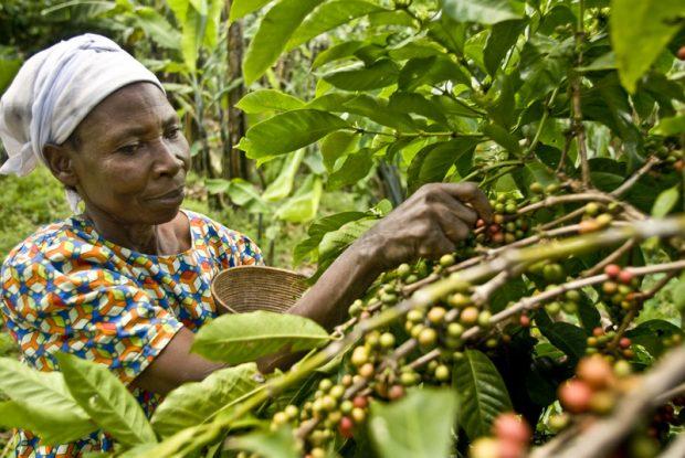 Betty ha encontrado nuevas oportunidades de desarrollo gracias al cultivo del café Tierra Madre. Imagen: Sergi García / Oxfam Intermón.