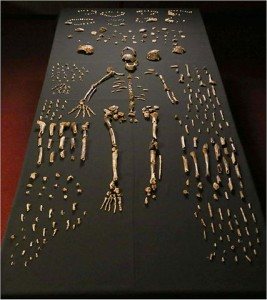 Huesos del 'Homo naledi'. Imagen de Lee Roger Berger research team / Wikipedia.