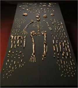 Huesos del 'Homo naledi'. Imagen de Lee Roger Berger research team / Wikipedia.