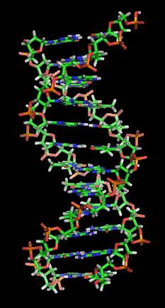 Representación de la estructura del ADN. Imagen de Wikipedia.