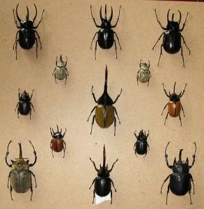 Colección de especímenes biológicos. Imagen de Wikipedia.