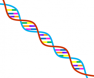 ¿ADN arco iris? Imagen de Pixabay / dominio público.