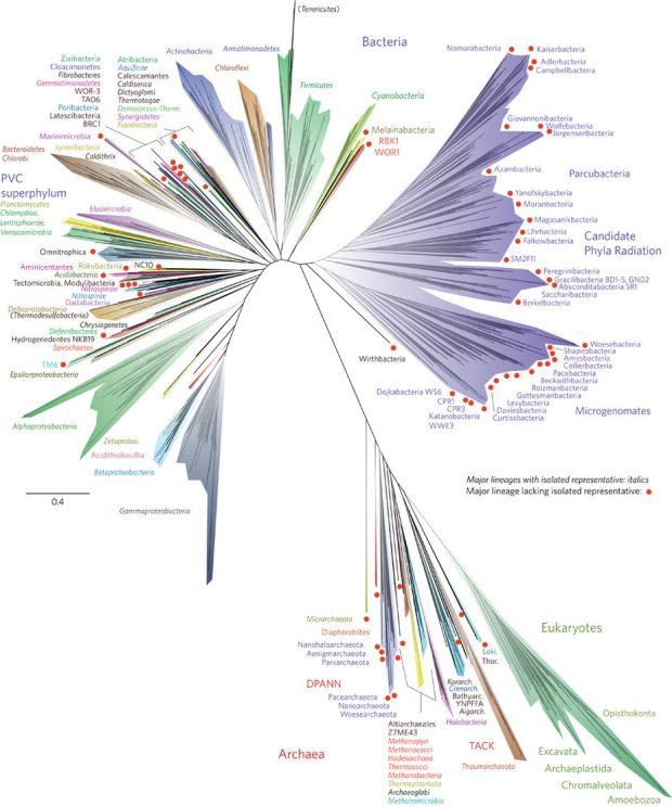 El árbol de la vida. Imagen de Hug et al, 2016.