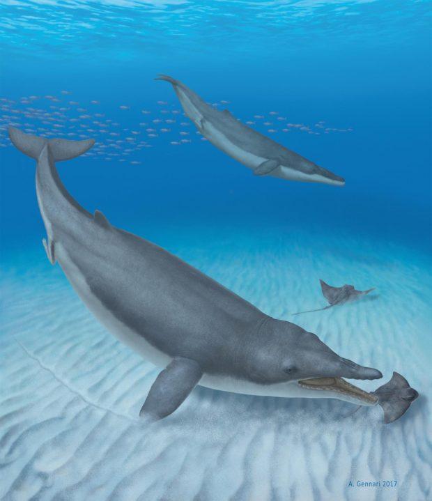 Ilustración de 'Mystacodon selenensis'. Imagen de Alberto Gennari.
