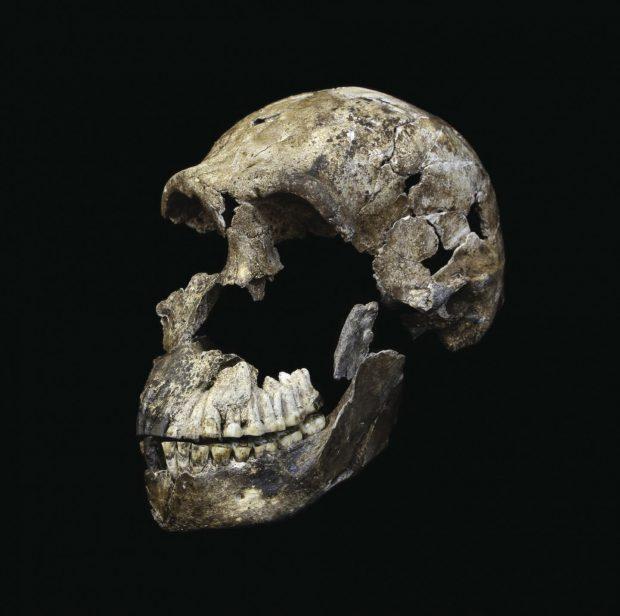 Cráneo casi completo de 'Homo naledi' hallado entre los nuevos restos. Imagen de Wits University/John Hawks.
