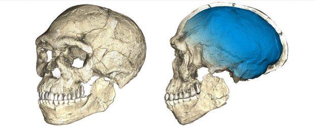Reconstrucción del cráneo de Homo sapiens de 300.000 años de edad hallado en Jebel Irhoud (Marruecos). Imagen de Philipp Gunz / MPI EVA.