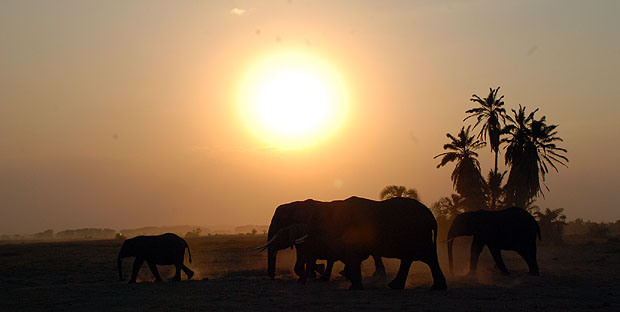 Elefantes en el Parque Nacional de Amboseli. Imagen de Javier Yanes.