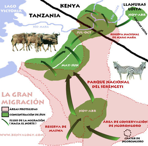 Esquema de la gran migración en el ecosistema Serengeti-Mara. Imagen © Javier Yanes.