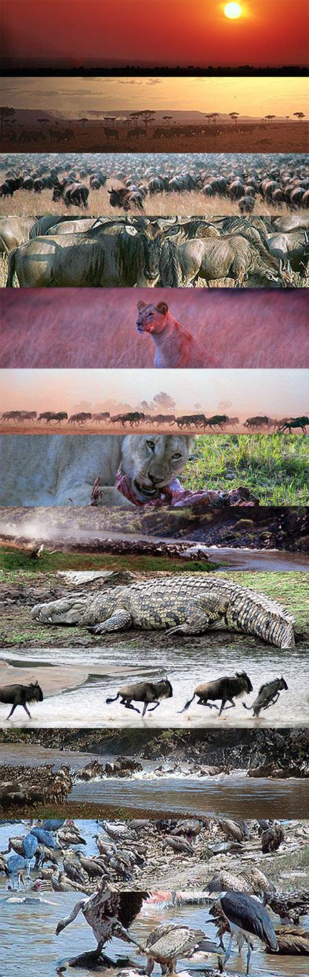 Algunas imágenes de la gran migración en Masai Mara (Kenya). Fotos de Javier Yanes.