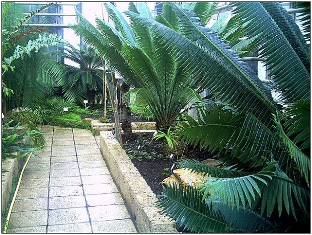Jardín botánico en la Universidad de Friburgo. Imagen de pictures Jettcom / Wikipedia.