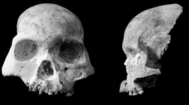 Cráneo del pueblo de la cueva del ciervo rojo. Imagen de Curnoe, D.; Xueping, J.; Herries, A. I. R.; Kanning, B.; Taçon, P. S. C.; Zhende, B.; Fink, D.; Yunsheng, Z. / Wikipedia.