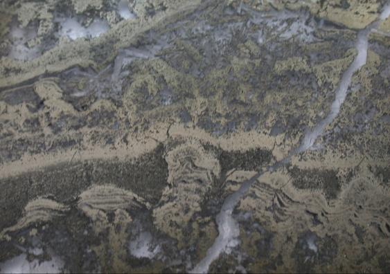 Estas rocas de la región de Pilbara, en Australia, contienen los fósiles de microbios más antiguos conocidos, de 3.500 millones de años de antigüedad. Imagen de Baumgartner et al., Geology, 2019.