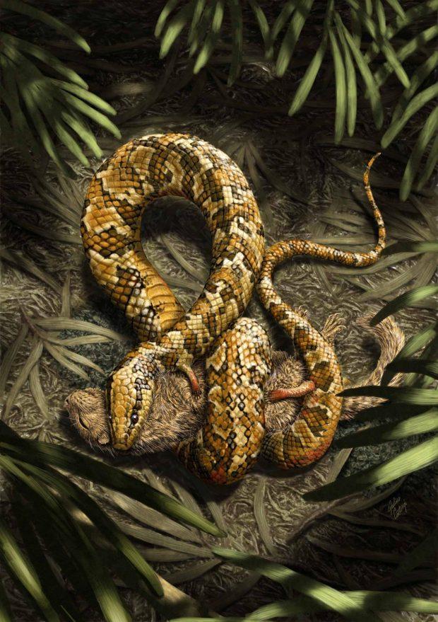 Reconstrucción de Tetrapodophis, la serpiente de cuatro patas del Cretácico. Imagen de Julius T. Cstonyi.