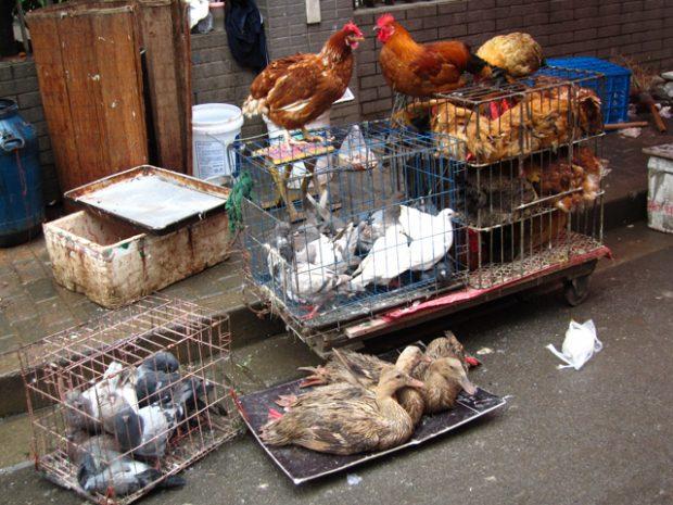 Un mercado en Shanghái, China. Imagen de Diana Silaraja / Pexels.