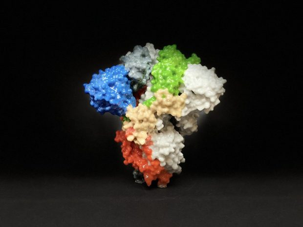 Un modelo impreso en 3D de la proteína Spike del coronavirus SARS-CoV-2 de la COVID-19. Imagen de NIH / Dominio público.