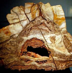 Estromatolito datado en 3.496 Ma y hallado en la Formación Dresser (Pil¬bara, Australia). Se distinguen láminas mineralizadas de microorganismos que probablemente establecían relaciones ecológicas entre sí. Fotografía tomada por el autor en el Museo de Historia Natural de Washington, Estados Unidos.