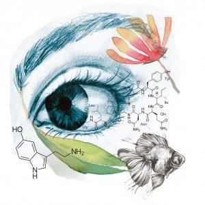 Ilustración de Silvia Jurado Sánchez