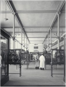 Sala de Vertebrados (antes de 1935). / Archivo MNCN