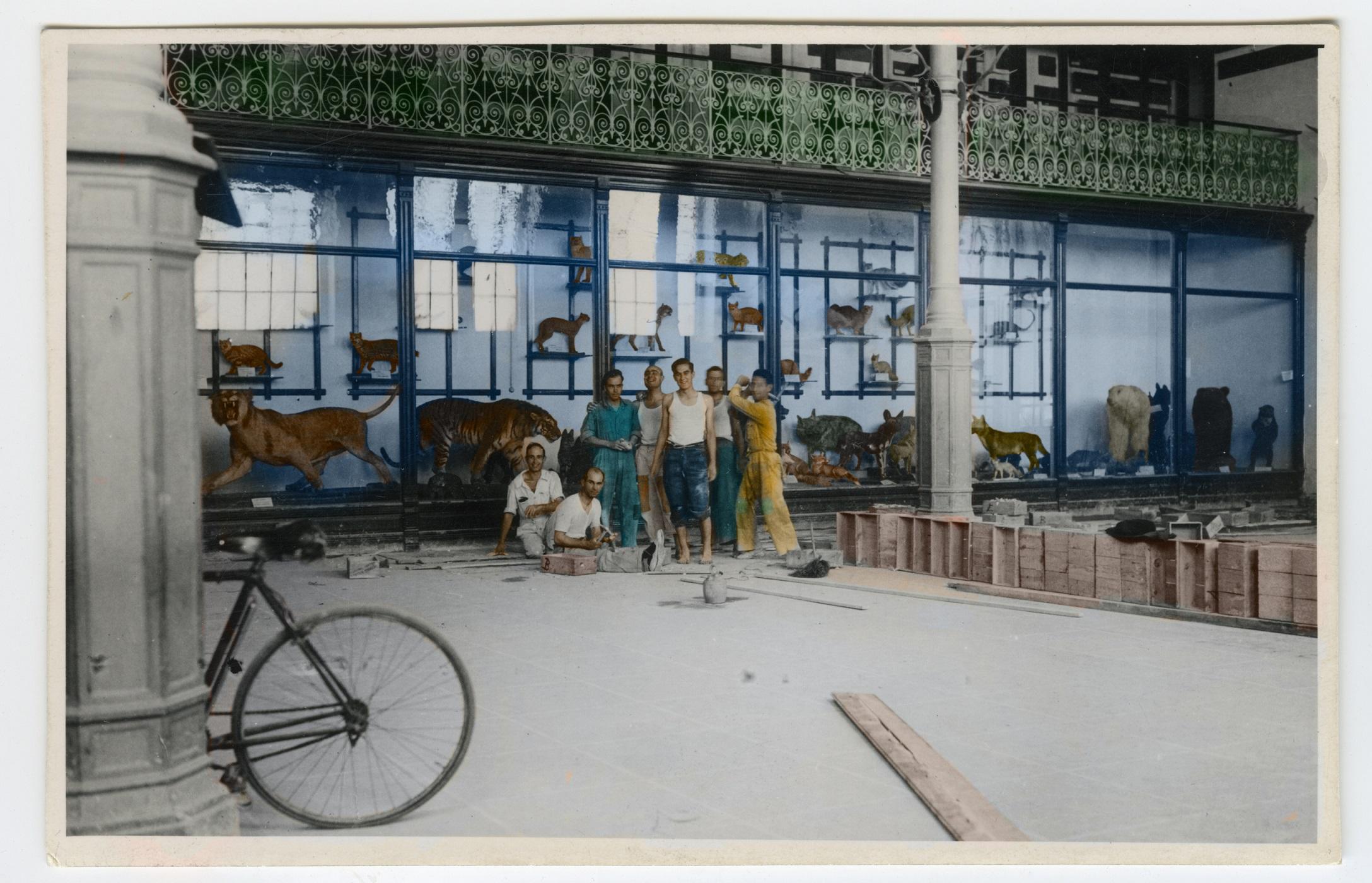Un descanso mientras se cambia la tarima en el Salón de Zoología, 1935. / Archivo MNCN