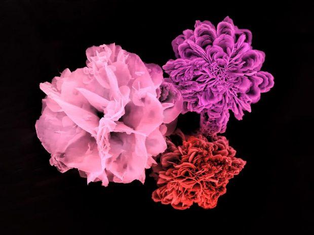 En esta imagen de microscopía electrónica de barrido se pueden observar tres enzimas distintas formando complejos cristalinos con fosfato de cobre. Los complejos de proteína y sal crecen formando estructuras semejantes a algunas flores. / David Talens Perales (IATA-CSIC). FOTCIENCIA16