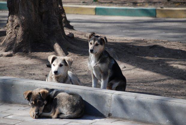 Perros Moscú