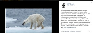 Imagen de la campaña en Facebook de WWF con una osa polar con desnutrición / Facebook WWF