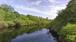 Imágen de Street view de la Amazonia brasileña / 20 Minutos