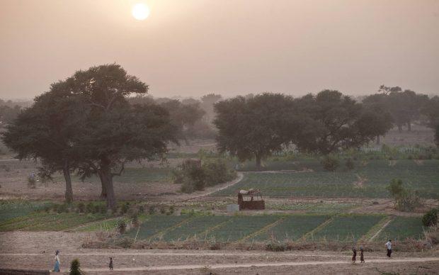 Cultivos en Níger/ Fao. Giulio Napolitano