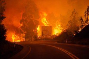 Las masas de eucalipto ocupan unas 646.700 hectáreas en Portugal / FOTO: EFE