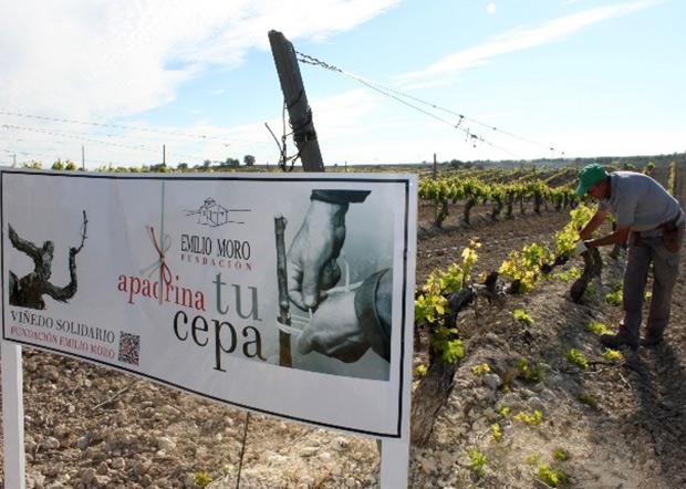 Apadrina-cepa-Emilio-Moro-01