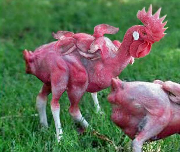 Pollos-KFC-leyenda