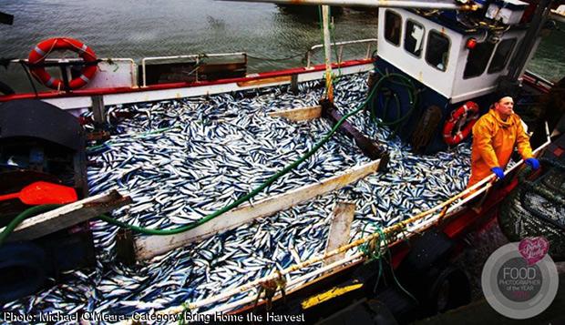 the_herri-26-Jan-16