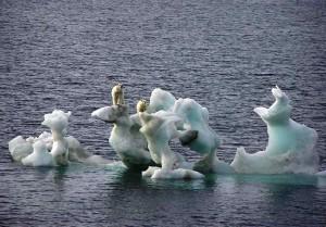 Osos polares en un iceberg en deshielo debido al cambio climático (GTRES).