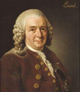 Carl von Linneo.