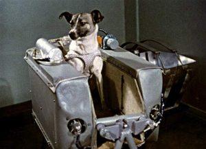 La perrita Laika (Blog El listo que todo lo sabe).