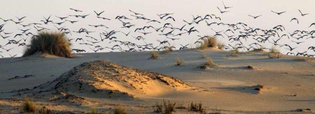 Una de las zonas de dunas de Doñana (José Manuel Vidal/EFE).