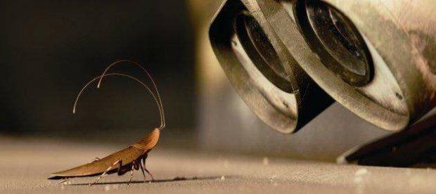 wall-e-y-la-cucaracha