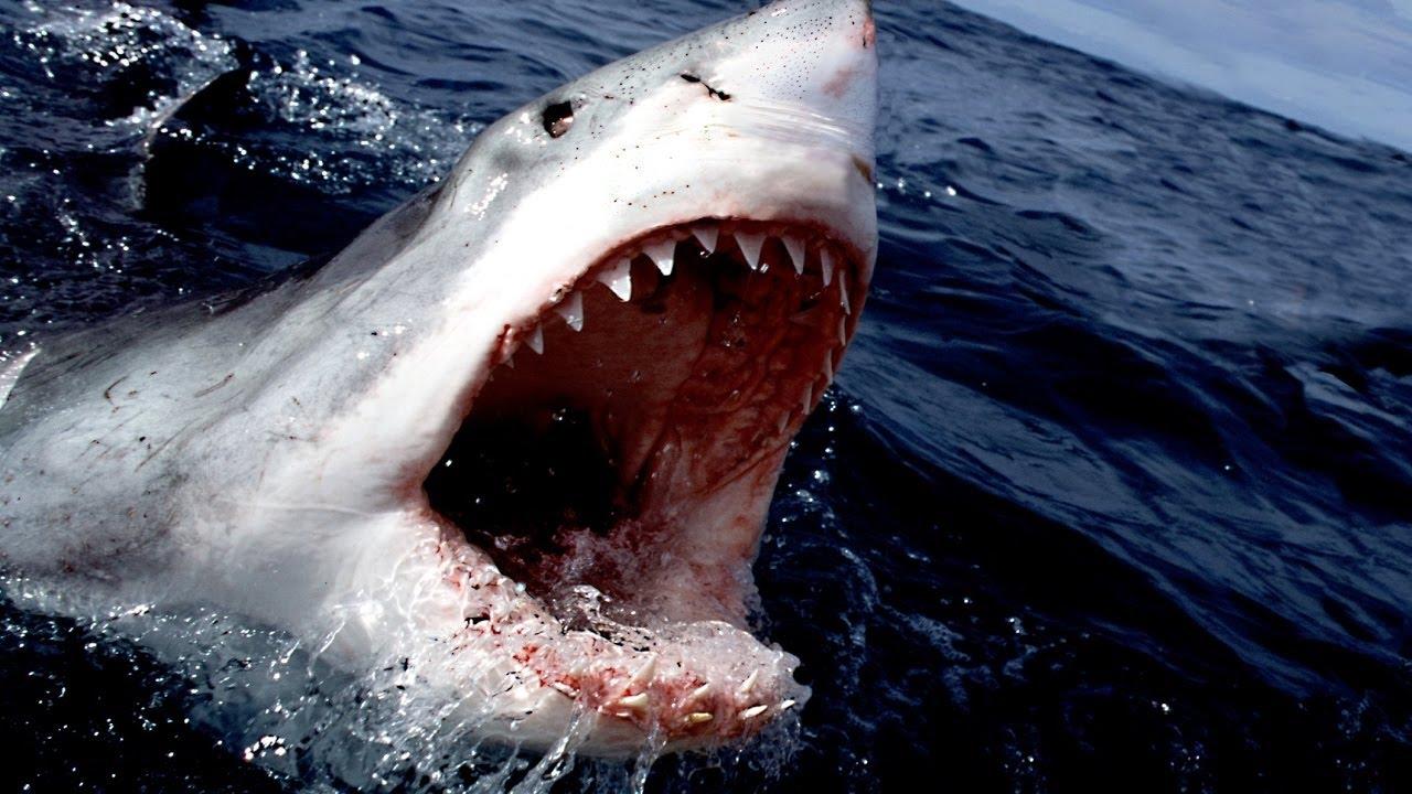 tiburón1