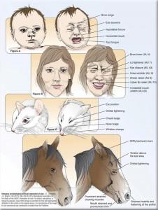 Codificación facial de la expresión de dolor en humanos y animales.