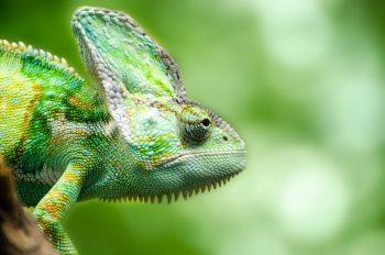 reptile-316735_960_720