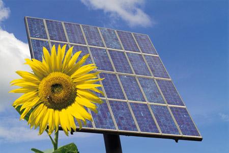 Girasol y placa solar