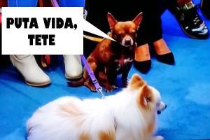 Los perros de Rappel, emocionados. (TELECINCO)