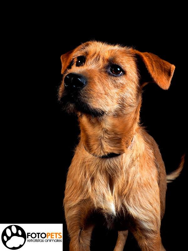 FRANCIS #adoptaunperro Francis tiene un año y es muy activo y cariñoso. Siendo solo un cachorrito tuvo sarna y la familia de etnia gitana con la que vivía decidió atarlo a las vías del tren para que fuera arrollado. Afortunadamente fue rescatado a tiempo por AXLA - Amig@s X Los Animales y hoy, totalmente recuperado, espera su segunda oportunidad de ser feliz. Hoy es un día perfecto para marcar la diferencia #adoptaunperro Contacta con la asociación y te informarán del proceso de adopción.