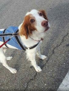 Tito es sociable y cariñoso. Está en la protectora APAMAG esperando un hogar. adopciones@apamag.org