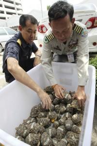 1,140 tortugas indias y una cría de cocodrilo incautadas en el aeropuerto. (EFE)