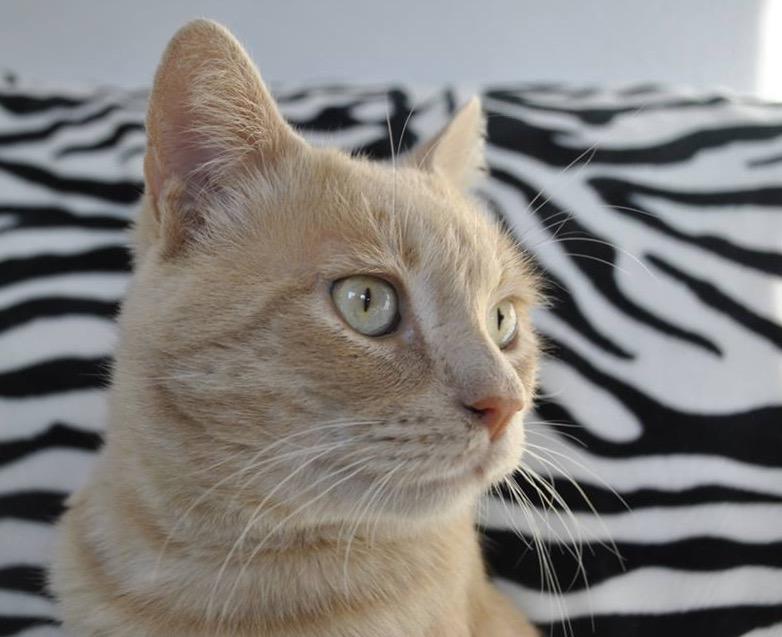 14 curiosidades de los gatos que no son egoístas ni traicioneros