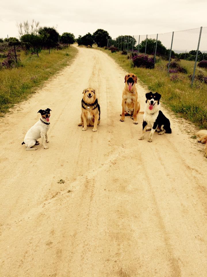 13173740 1261028983915178 8419650105304373654 n en busca for Piscina para perros madrid