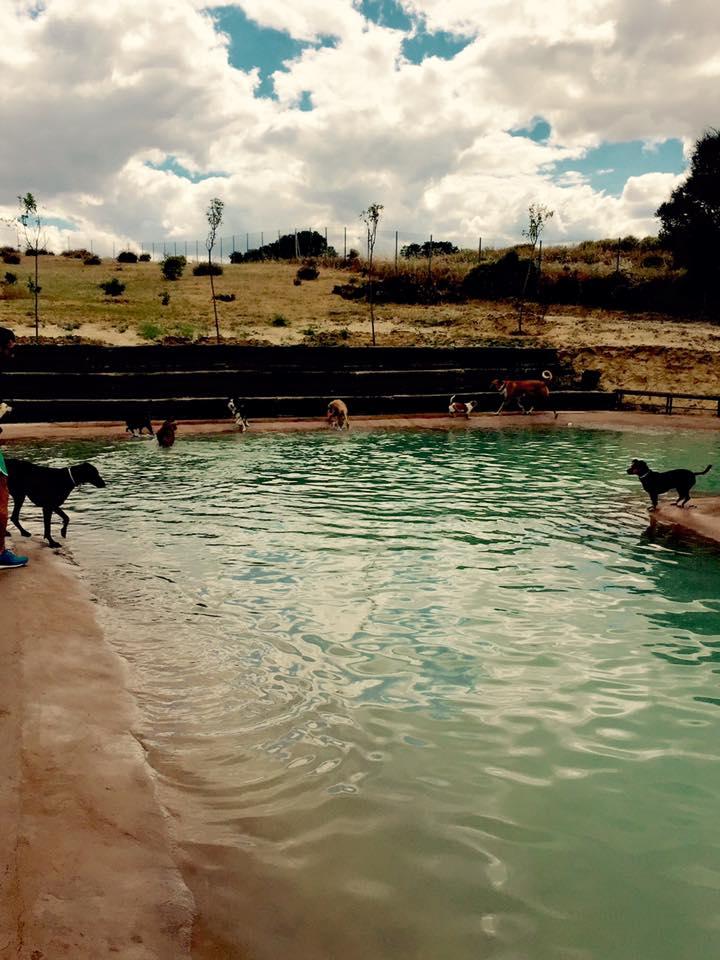 Arranca la primera piscina solo para perros en madrid en for Piscina para perros madrid